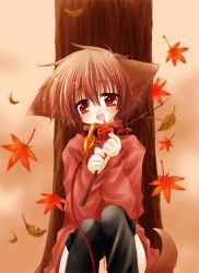 animal_ears autumn collar dog_ears dog_tail hinata_(pure_pure) leash pure_pure sakurazawa_izumi tail thighhighs rating:Safe score:4 user:danbooru