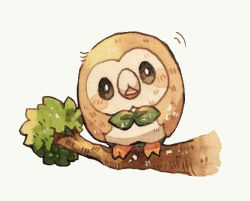 beak bird branch commentary_request full_body looking_at_viewer mokarooru no_humans pokemon pokemon_(creature) rowlet standing_on_branch