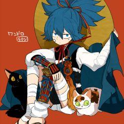 1boy bandage black_cat blue_eyes blue_hair calico cat hat kote l_hakase male_focus orange_background sayo_samonji simple_background sitting solo touken_ranbu