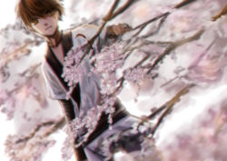 1boy alternate_costume artist_request brown_eyes brown_hair cherry_blossoms dutch_angle japanese_clothes obi sash short_hair solo spring_(season) tree tsubasa_chronicle xiaolang