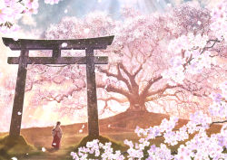 1girl black_hair cherry_blossoms commentary_request from_behind hair_tubes hakama japanese_clothes kun52 light_rays long_hair miko original petals red_hakama rope sandals scenery shimenawa shrine solo sunbeam sunlight torii tree wide_sleeves