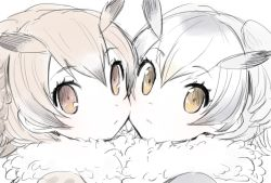 2girls brown_eyes brown_hair cheek-to-cheek collar eurasian_eagle_owl_(kemono_friends) expressionless eyebrows eyebrows_visible_through_hair eyelashes fur_collar grey_hair hair_between_eyes head_wings kanimuraebio kemono_friends looking_at_viewer multicolored_hair multiple_girls northern_white-faced_owl_(kemono_friends) partially_colored portrait simple_background sketch two-tone_hair white_background white_hair white_skin wings