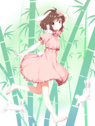 1girl animal animal_ears arm_up bamboo bamboo_forest barefoot blush brown_hair bunny bunny_ears bunny_tail carrot dress forest full_body highres inaba_tewi jewelry looking_at_viewer nature necklace nekoze pink_dress puffy_sleeves red_eyes short_hair short_sleeves smile solo tail touhou