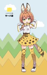 1girl :d animal_ears belt bow bowtie cosplay elbow_gloves full_body gloves hoshizora_rin kemono_friends kemonomimi_mode love_live! love_live!_school_idol_project open_mouth orange_hair partially_translated paw_pose pigeon-toed print_bow print_gloves print_legwear print_skirt serval_(kemono_friends) serval_(kemono_friends)_(cosplay) serval_ears serval_print serval_tail shikei_(jigglypuff) shoes short_hair skirt sleeveless smile solo tail thighhighs translation_request white_shoes yellow_eyes