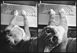 1girl cat computer from_above gloves ilya_kuvshinov laptop looking_at_viewer looking_up macbook monochrome original personification solo tank_top
