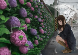 1girl bangs black_jacket blunt_bangs blush boots brown_boots bush cloud cloudy_sky commentary_request flower frog from_side hime_cut holding holding_umbrella hydrangea jacket knee_boots long_hair looking_at_viewer miniskirt original outdoors power_lines rain skirt sky solo somehira_katsu squatting transparent_umbrella umbrella