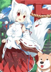 1girl albino animal_ears blush collar detached_sleeves dog fang hat inubashiri_momiji japanese_clothes l4no long_sleeves looking_down open_mouth pom_pom_(clothes) red_eyes rope shimenawa shirt short_hair skirt smile string tail tokin_hat tongue tongue_out torii touhou white_hair wide_sleeves wolf_ears wolf_tail