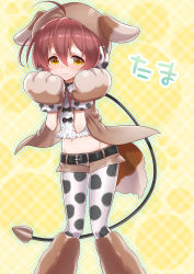 1girl ahoge animal_costume belt blush brown_eyes brown_hair brown_shorts character_name closed_mouth collar dog_costume eyebrows_visible_through_hair groin halftone knees_together_feet_apart leash magical_girl mahou_shoujo_ikusei_keikaku mahou_shoujo_ikusei_keikaku_unmarked navel nose_blush okazaki_beru outline pantyhose paws short_hair short_shorts shorts solo standing tama_(mahoiku) wavy_mouth yellow_background