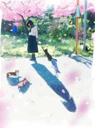 1girl black_cat black_eyes black_hair black_legwear black_shoes blue_neckerchief blue_sailor_collar blue_skirt butterfly cat cherry_blossoms day fence grass high-waist_skirt highres holding holding_letter letter loafers long_shadow long_skirt long_sleeves looking_at_viewer multiple_cats nakamura_yukihiro neckerchief original pet petals sailor_collar shadow shoes short_hair skirt socks solo sunlight tree