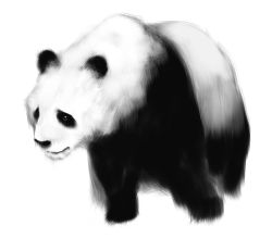 black_eyes ears fur looking_at_viewer no_humans panda paws poaro simple_background solo white_background